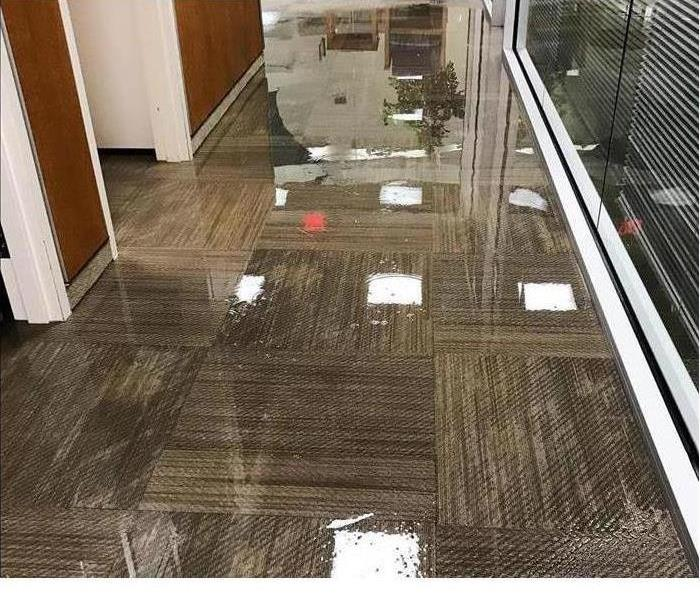Commercial grade carpet water damage standing water on carpet